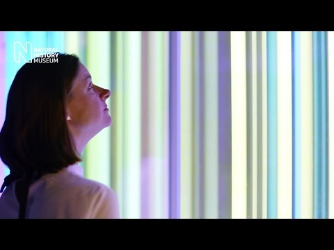 Our Spectral Vision, Liz West's art installation for Colour and Vision | Natural History Museum