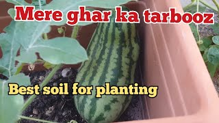 Home Grown Watermelon | Which soil I Have Used For Planting | Family vlogs