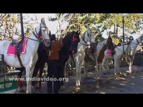 Horses on safari at Ridge in Shimla