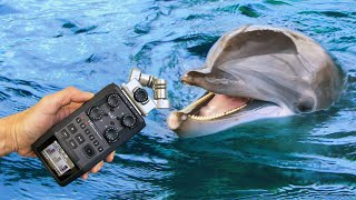 Making music with rescue dolphins!