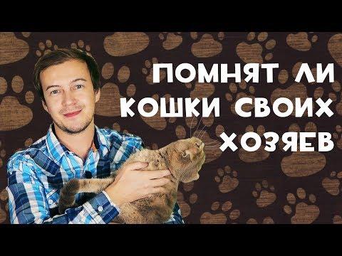 Как коты относятся к своим хозяевам