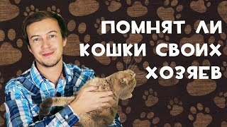 Скучают ли кошки по своим хозяевам?