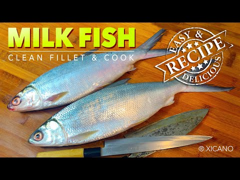 Milk Fish (Bangus) Clean, Fillet & Cook