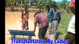 OM ENTERPRISES 09721474731 MANUAL RICE TRANSPLANTER & WEDDDER