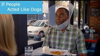 Let's Face It - We Would Not Be Able To Handle A Cone of Shame | IF PEOPLE ACTED LIKE DOGS