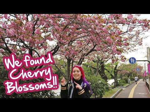 Japanese Castle Ruins & Ohori Park - Fukuoka Vlog