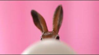 Portal Aktivierung - Einwirkung auf den Twinflame Prozess Ein besonderes Osterfest! Anerkennen !