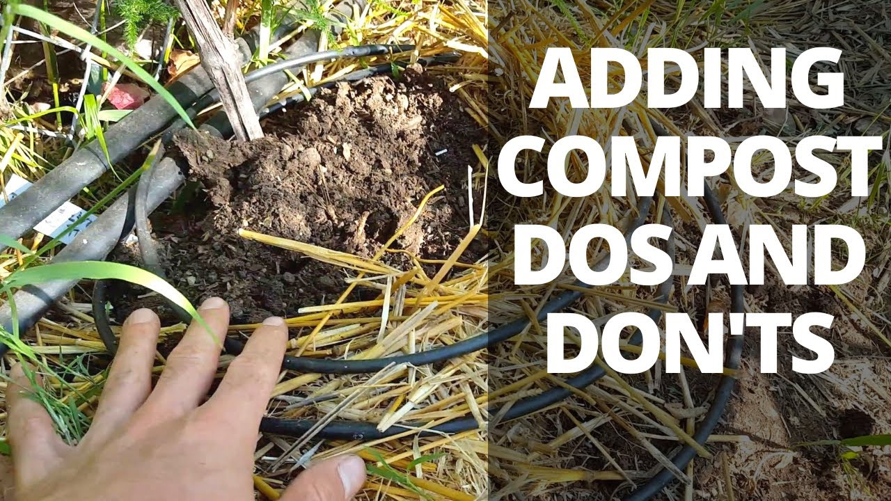 Adding Compost To Plants Dos And Don Ts You