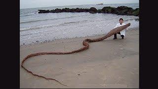 Нашли туристы, а ОФИГЕЛИ ВСЕ / Страшные находки на пляже
