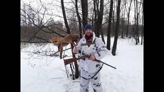 Охота на лису с манком. fox hunting
