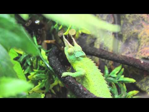 Jackson Chameleon Clean Water Filter