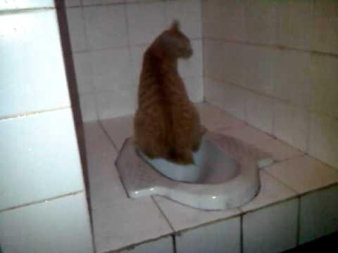 KUCING (meng-meng) pipis di WC part 2