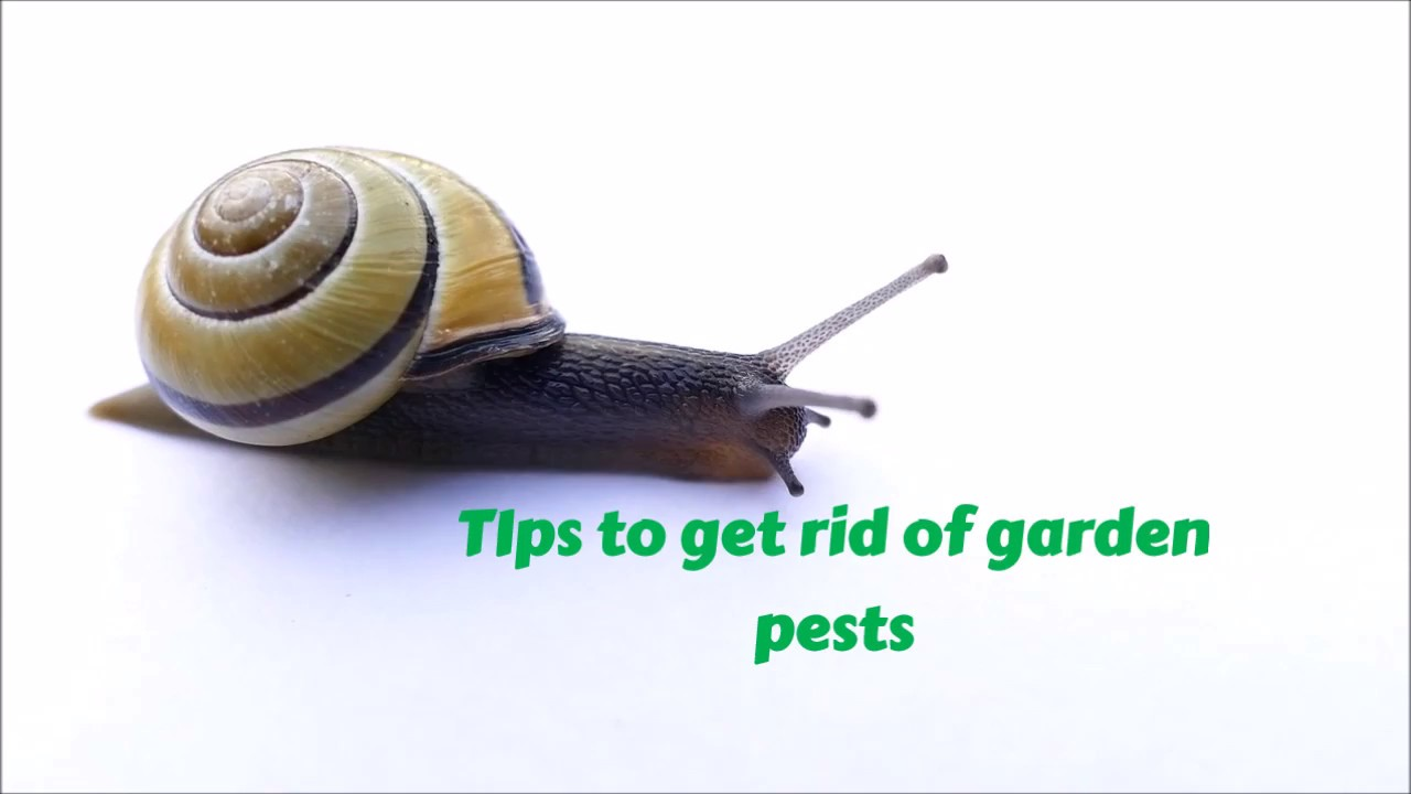 Get Rid Of Garden Pests How To Eliminate Slugs And Bugs Youtube
