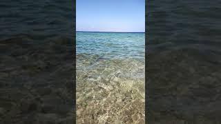 Красное море Шарм Египет отдых Queen Sharm Hotel море 1