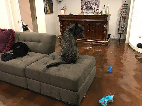 Hurricane Harvey Hits our Meyerland Home