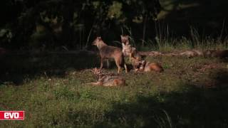 Tata Safari Storme - Pench Wildlife Sanctuary