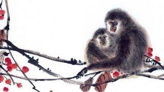 【12生肖2020年运势运程】生肖属猴的人2020年运程详解 易学洪辛老师