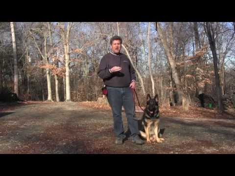 german-shepherd-dog-training-|-winston-salem-nc