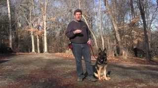 German Shepherd Dog Training | Winston Salem Nc