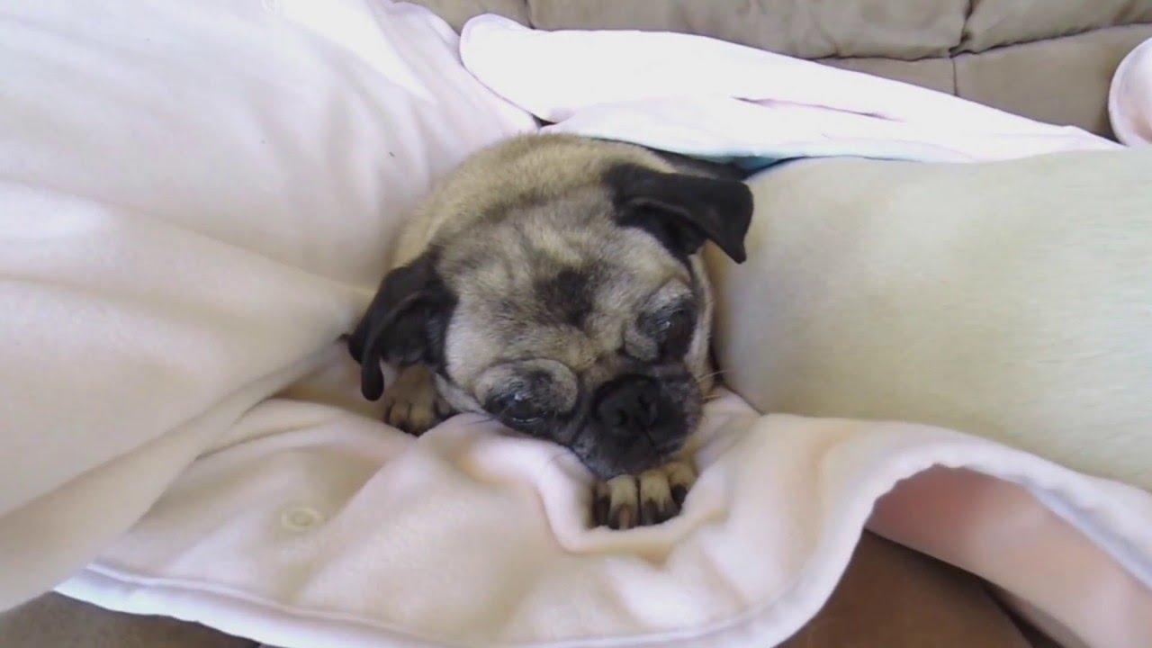 Washable Doggie Pee Pads - Goldenacresdogs.com