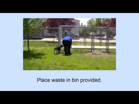 Dog Walking Training Video 6:  Safe Dog Handling & the Unexpected