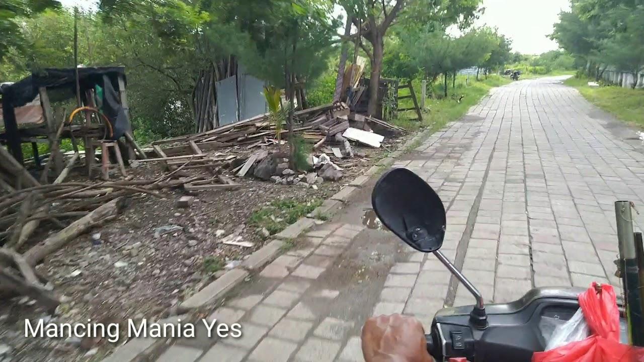 Bolang Mencari Spot Mancing di Mangrove Wonorejo Surabaya ...