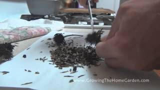 Separating Coneflower Seeds from the Dried Seed Head