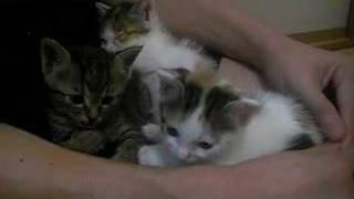 3姉妹の猫だんごです。仲良し姉妹でした。 http://blog.livedoor.jp/un...