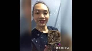himalayan-bengal cat/bath time/ how to take care a cat