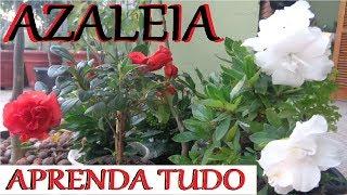 Tudo Sobre a Planta Azaleia