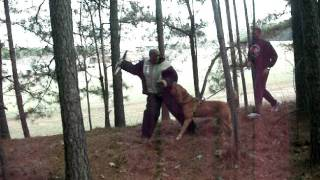 Dogue De Bordeaux - Von Asgard's Killan Send Into Woods.mov