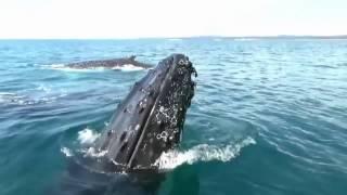 Над глубиной  Хроника выживания  (Cage Dive ),  2017   Международный Трейлер HD