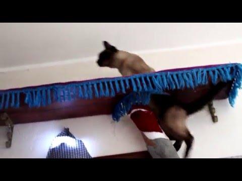 Когтеточки для кошек своими руками поможем кошке и спасем