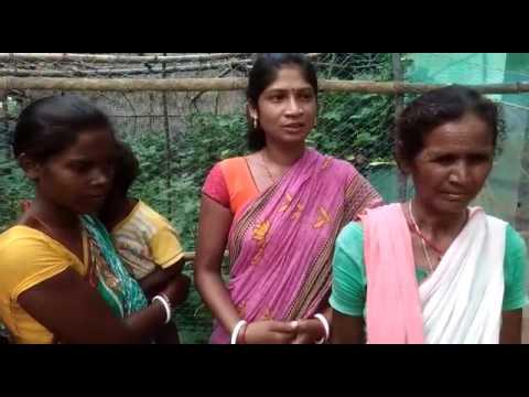 Bankhairbani Village,  Saraikela District under RWSSP-LIS