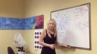 Урок 7. Концепция здоровья