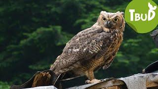 Komischer Kauz (Folge 29) | Tiere bis unters Dach | SWR Kindernetz