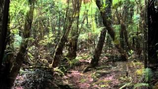 Deafening Silence - Poetry