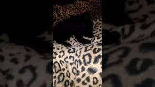 Как точит когти наш котенок