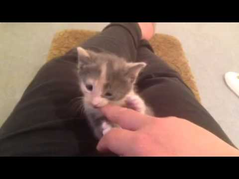 Why do kittens bite fingers?