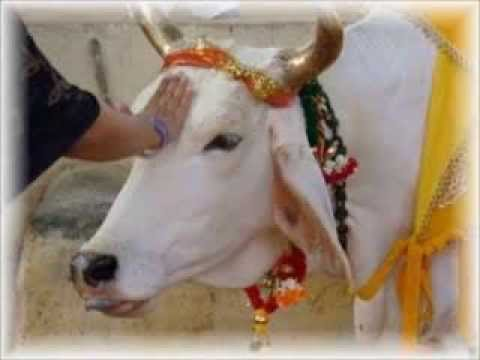 Song on Cow - Gowardhan Dhari Ki Dulari Gau Maa