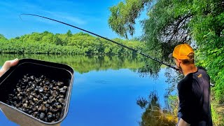 РЫБАЛКА В ПРОВОДКУ НА РАГУЛЯ РАКУШКУ НА РЕКЕ КАК ловить в проводку на рагуля поплавочной удочкой