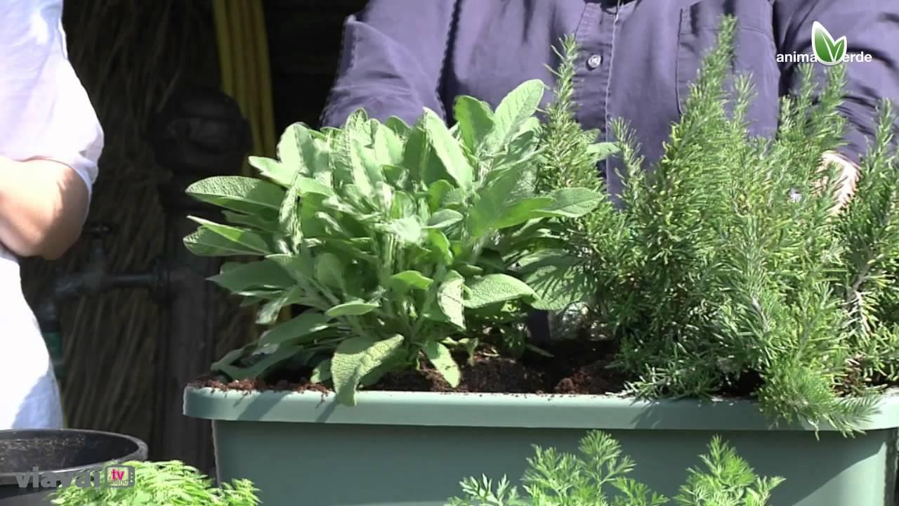 Lorto in terrazzo  Tutorial piante aromatiche  YouTube