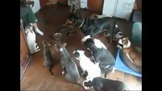 有趣的狗 собаки кушают dog eat