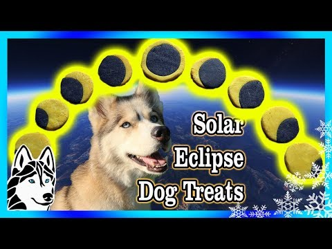 DIY SOLAR ECLIPSE DOG COOKIES | DIY Dog Treats | Snow Dogs Snacks 79