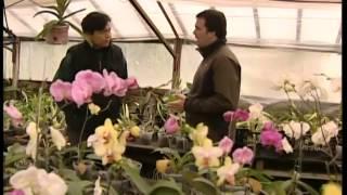 Orquídeas Un Negocio Milenario Que Tiene Sus Fanáticos En La Argentina 516 2013 06 15