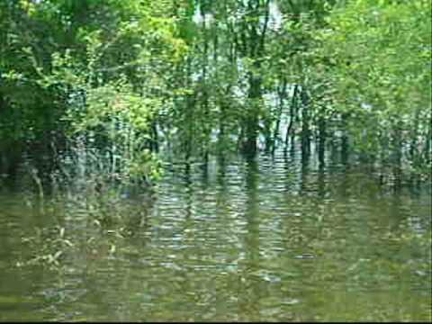 Mississippi Backwater Swamp