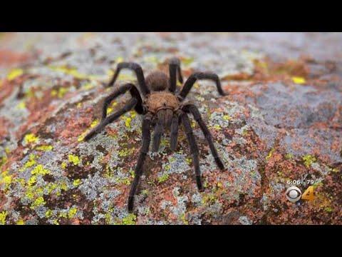Big Rig - Spider Migration, Nightmares For Days