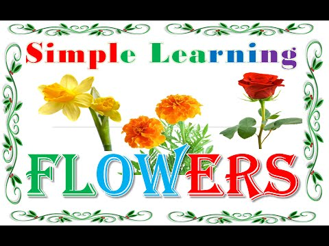 learn flowers name with picture  audio // flowers name video for, Natural flower
