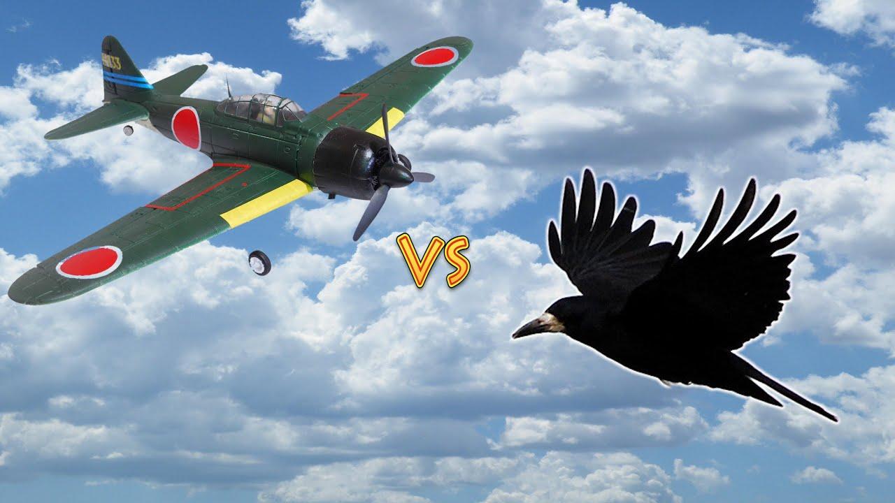 Вороны против Самолёта на радиоуправлении-Ravens against the aircraft radio control