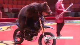 Медведи на велосипедах и медвежий бокс: в Ярославле проходят гастроли цирка династии Филатовых